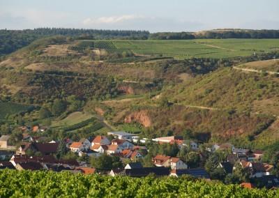 Blick auf Guldental und umliegende Weinberge